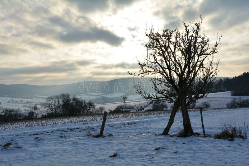 Vinterlandskap med soluppgången med trädet royaltyfri foto