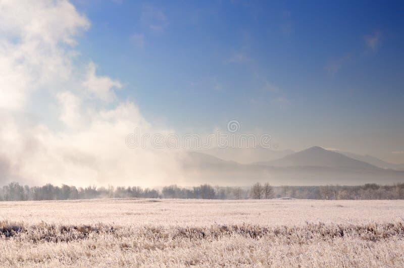 Vinterlandskap med spektakulär tung dimma ovanför kala träd bak fältet som täckas med djupfryst torrt gräs under soluppgång royaltyfri bild