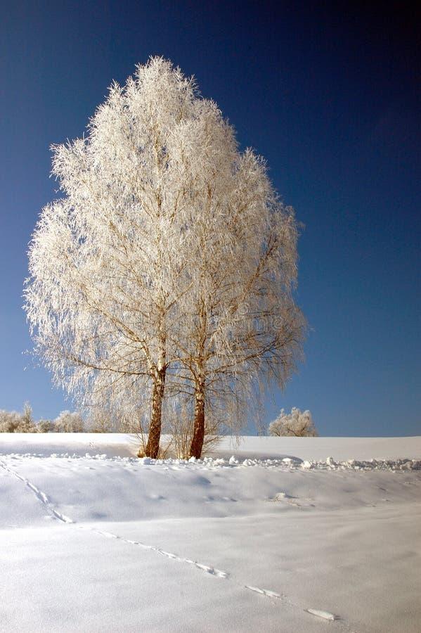 Vinterlandskap med träd och is arkivfoton