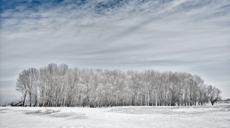 Vinterlandskap med träd som täckas med frost arkivfoton