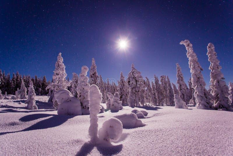 Vinterlandskap på natten i Sverige Vilhelmina royaltyfria foton