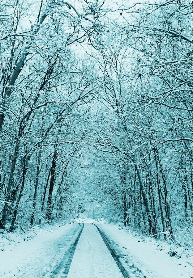 Vinterlandskap, snöig skog och väg royaltyfria foton