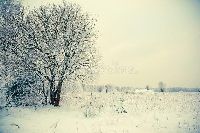 Vinterlandskap, snöräkning på filialerna av träd, drivor, ett fält i snön l?tt bakgrund redigerar bildnaturen till vektorvintern royaltyfri foto