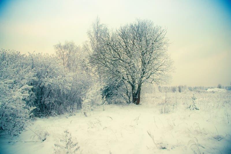 Vinterlandskap, snöräkning på filialerna av träd, drivor, ett fält i snön l?tt bakgrund redigerar bildnaturen till vektorvintern royaltyfri fotografi