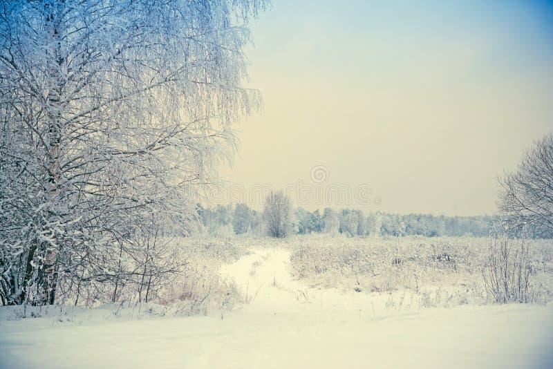 Vinterlandskap, snöräkning på filialerna av träd, drivor, ett fält i snön l?tt bakgrund redigerar bildnaturen till vektorvintern royaltyfria foton