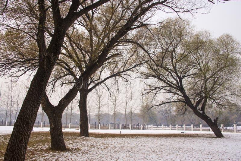 Vinterlandskap, träd, snö royaltyfria bilder