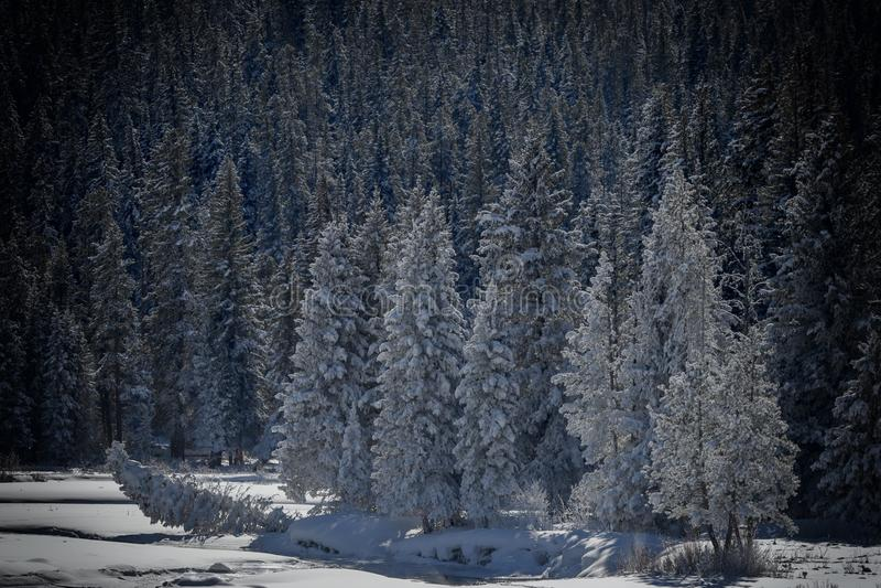 Vinterlandskap Yellowstone royaltyfri bild