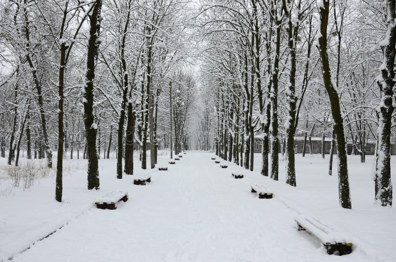 Vinterlandskapet i snö-täckt parkerar efter ett tungt vått snöfall Ett tjockt lager av snö ligger på filialerna av träd royaltyfri bild