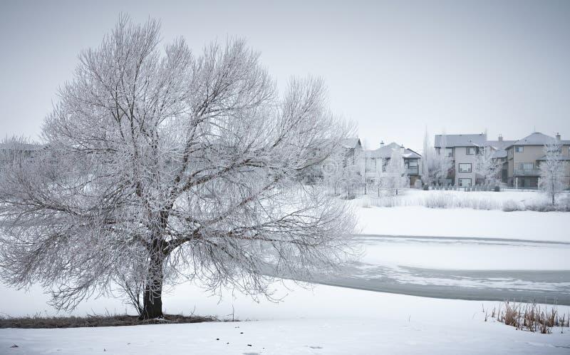 Vinterlandskapet med det frostiga trädet i grannskap parkerar arkivfoto