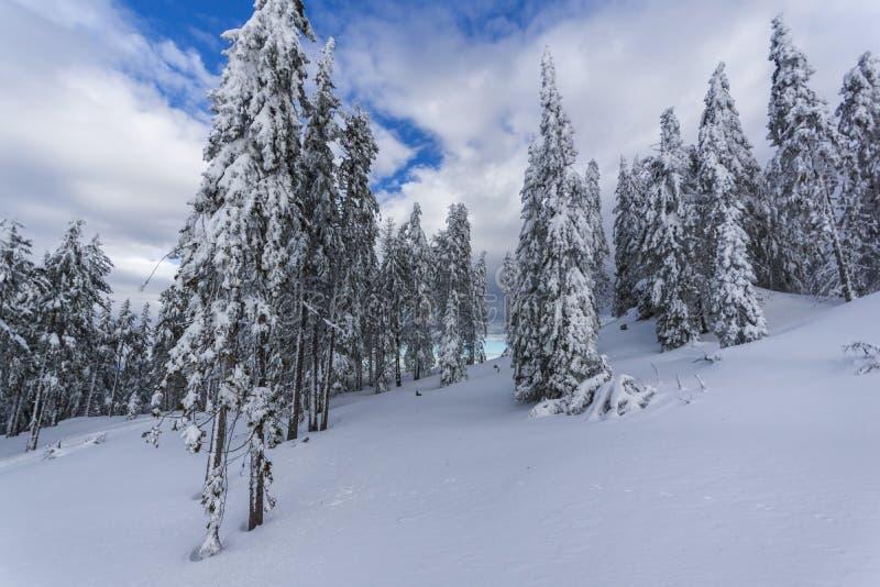 Vinterlandskapet med Pines täckte med insnöade Rhodope berg nära den Pamporovo semesterorten, Bulgarien royaltyfri fotografi