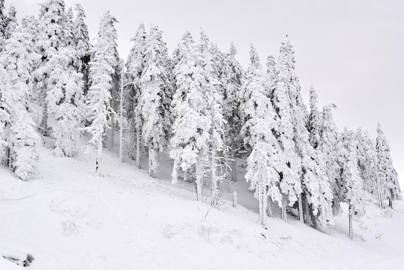 Vinterlandskapet med skogen för granträd som täckas av det tunga insnöade Postavaru berget, Poiana Brasov semesterort, Rumänien fotografering för bildbyråer
