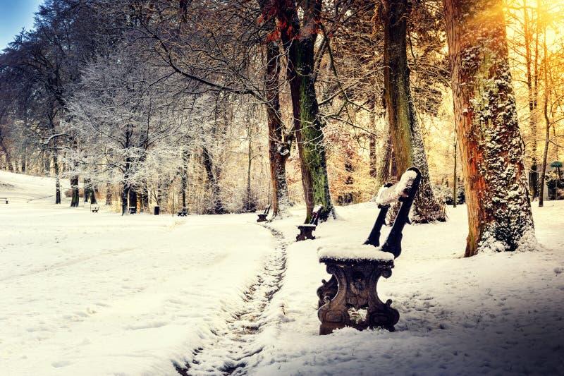 Vinterlandskapet med täckt snö parkerar gränden fotografering för bildbyråer