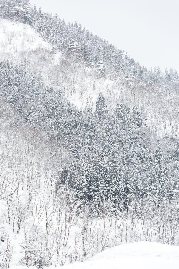 Vinterlandskapskog royaltyfri fotografi