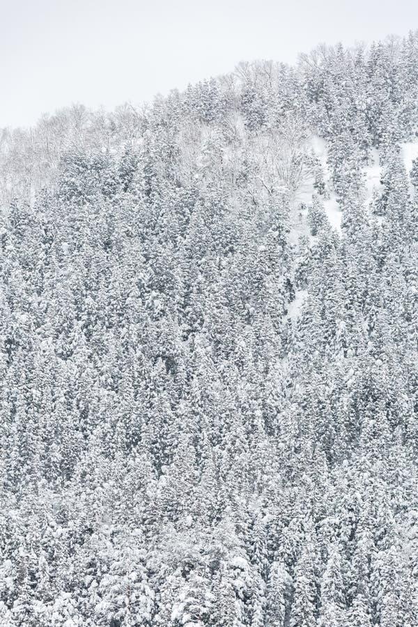 Vinterlandskapskog royaltyfri foto