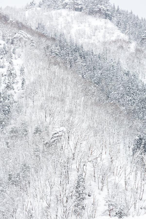 Vinterlandskapskog royaltyfri bild