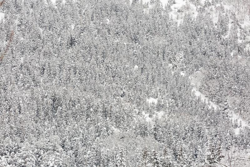 Vinterlandskapskog arkivbilder