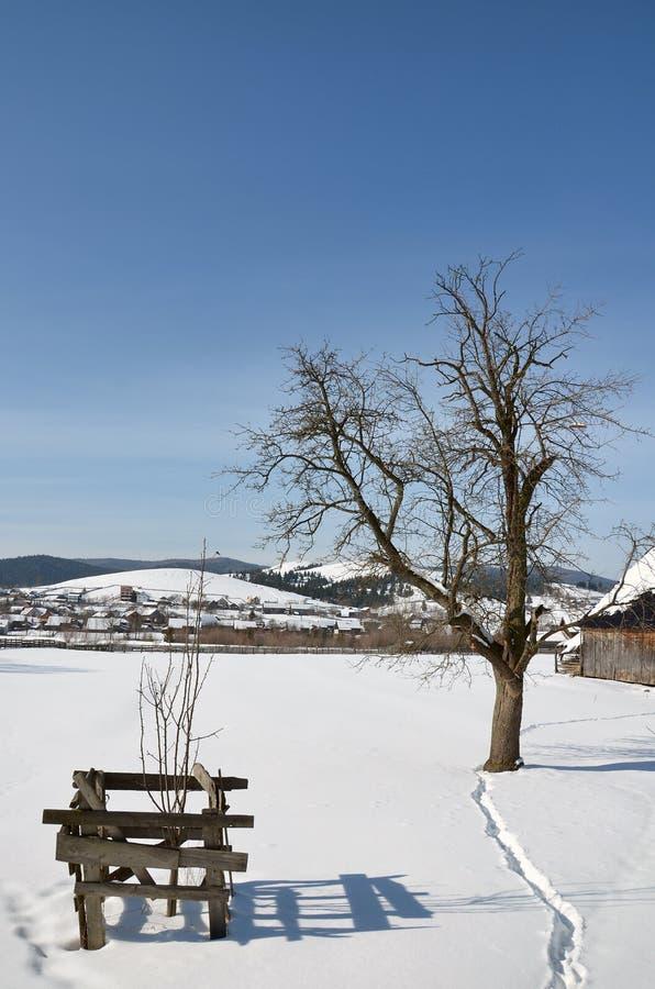 Vinterliggande med den ensliga treen royaltyfri foto