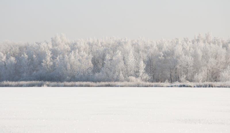 Vinterliggande med snow royaltyfri foto