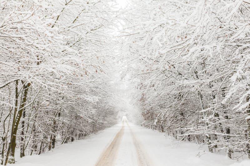 Vinterliggande med vägen som omges av trees arkivbilder