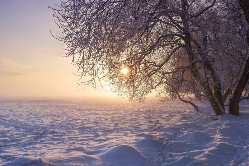Vinterliggande på solnedgången Julnaturbakgrund Färgrik vinter med solen frostiga trees Härlig Xmas-plats royaltyfria foton