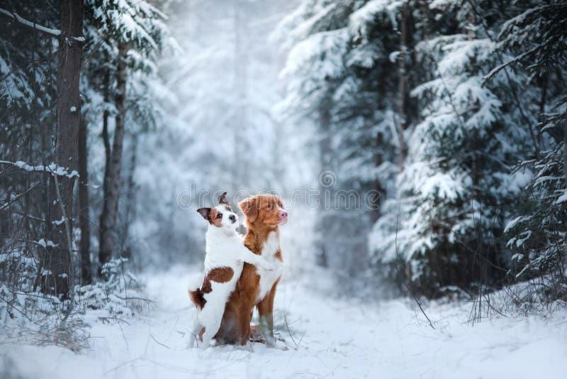 Vinterlynne, kamratskap och förälskelse för två hundkapplöpning royaltyfri fotografi