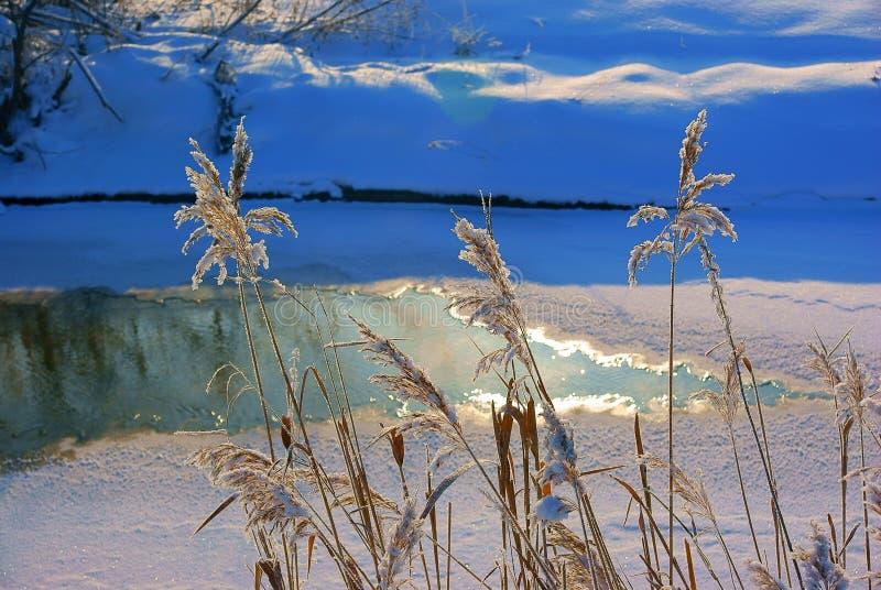 Vintermorgon på floden royaltyfria foton
