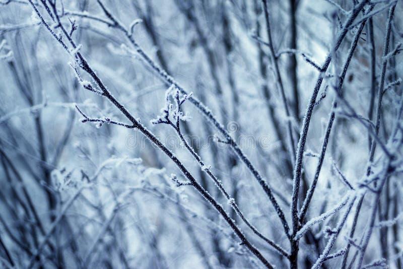 Vintern förgrena sig i skogen royaltyfri fotografi