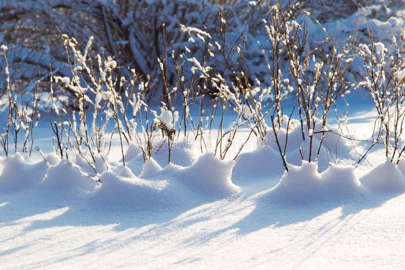 Vintern förgrena sig med snow royaltyfri bild