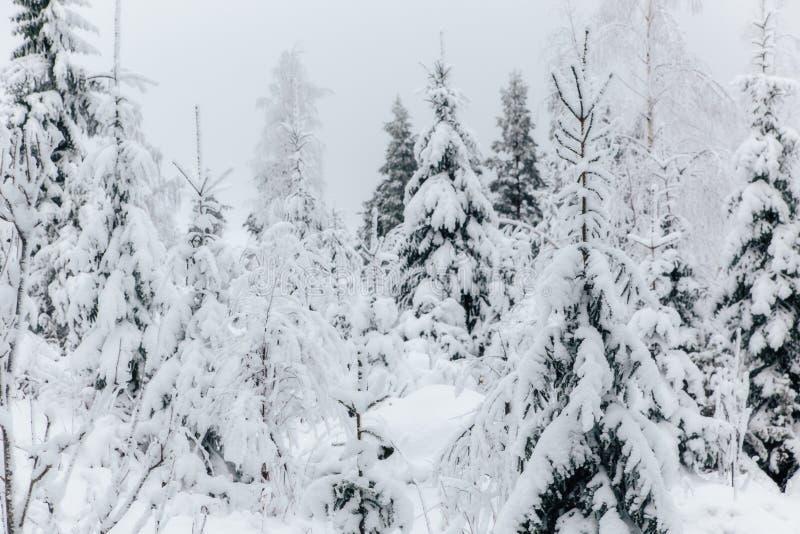 Vintern i Finland täckte i snö fotografering för bildbyråer