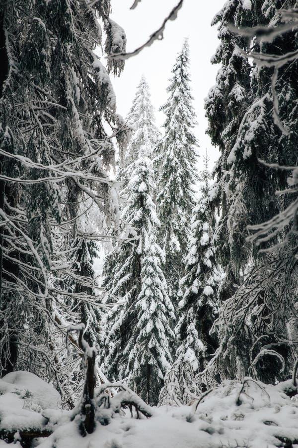 Vintern i Finland täckte i snö royaltyfri fotografi
