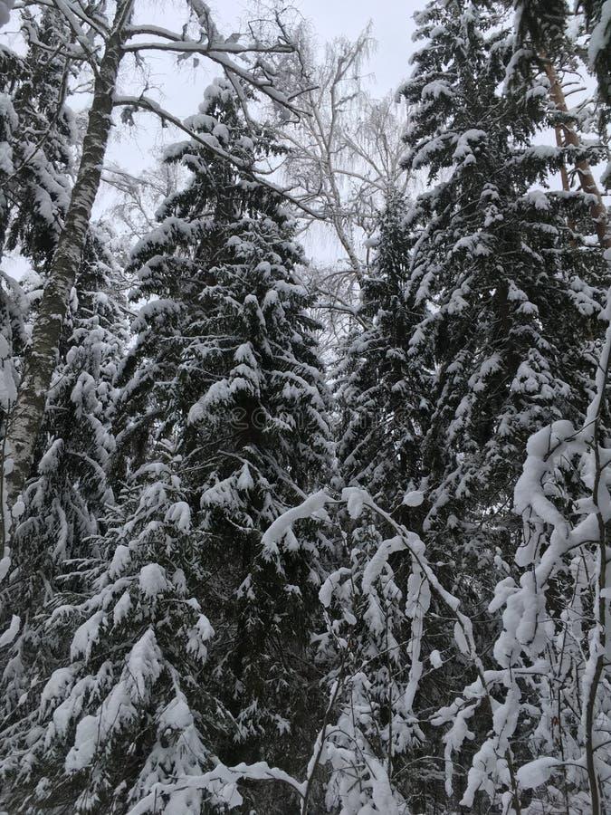 Vintern i Ryssland är en saga arkivfoton