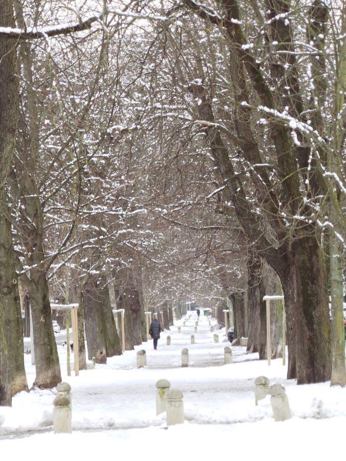Vintern i stad parkerar snö för trädavenygränd fotografering för bildbyråer