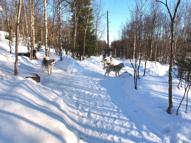 Vintern i stadsmitten av Murmansk, Ryssland royaltyfri fotografi