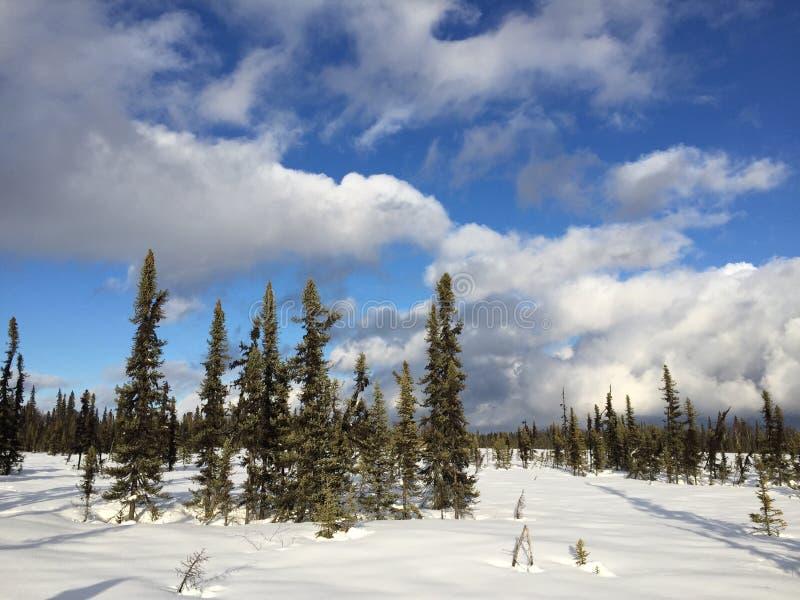 Vintern irrar royaltyfria bilder