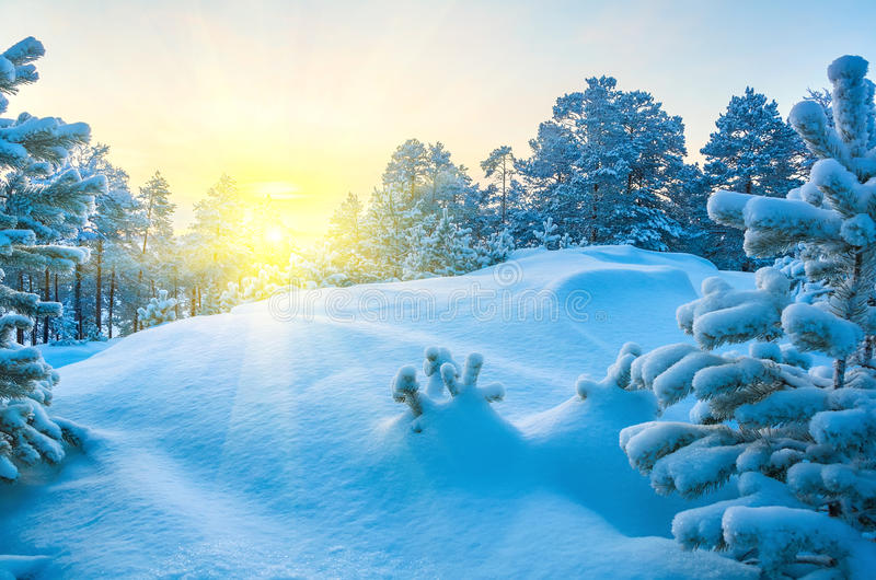 Vintern landskap royaltyfri foto