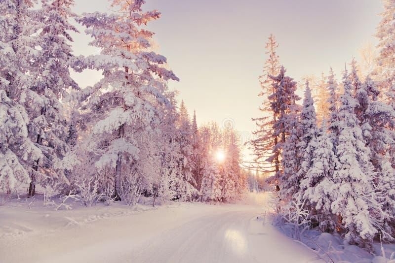 Vintern landskap arkivfoton
