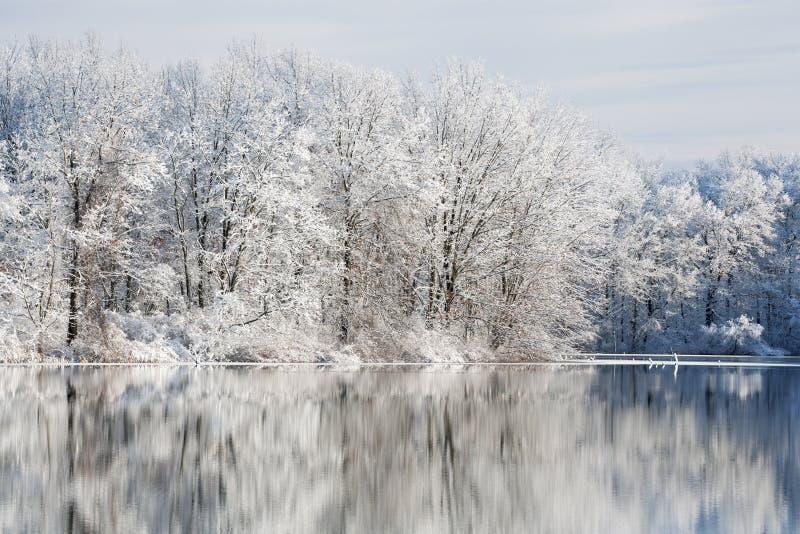 Vinter Jackson Hole Lake royaltyfri fotografi