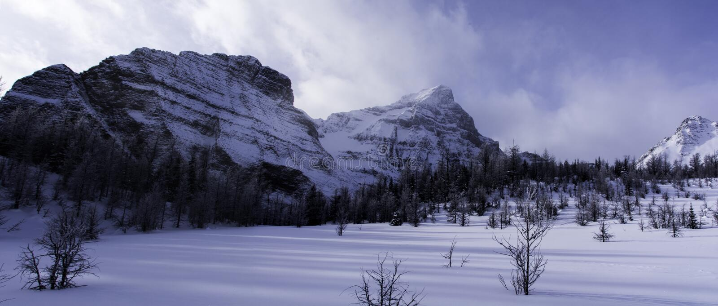 Vintern landskap den Banff nationalparken arkivbild