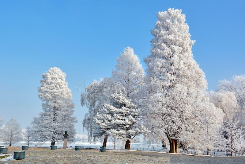 Vintern landskap i parkera arkivfoton