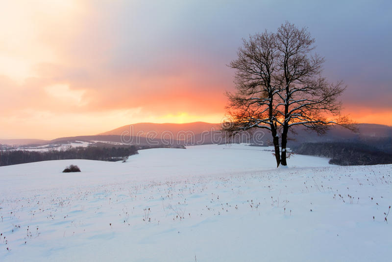 Vintern landskap i snownatur med sunen och treen royaltyfria foton