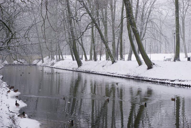 Vintern parkerar in 11 royaltyfri bild