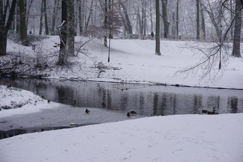 Vintern parkerar in 6 royaltyfri foto