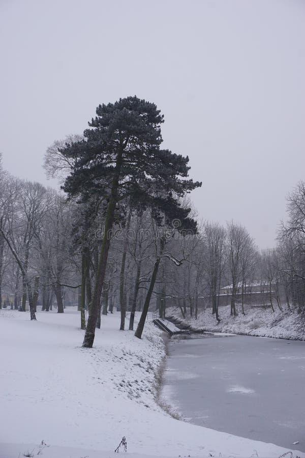 Vintern parkerar in 8 royaltyfri bild