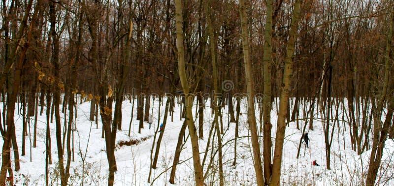 Vintern parkerar med tunn träd och snö royaltyfri bild