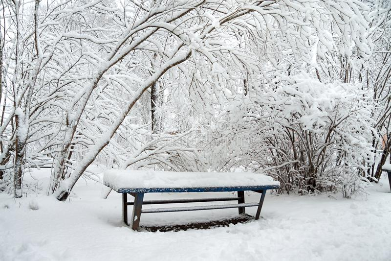 Vintern parkerar, träd och en bänk som täckas med snö royaltyfria foton