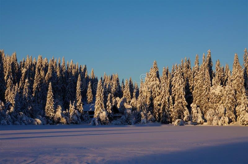 Vintern sörjer träd med snö royaltyfria foton