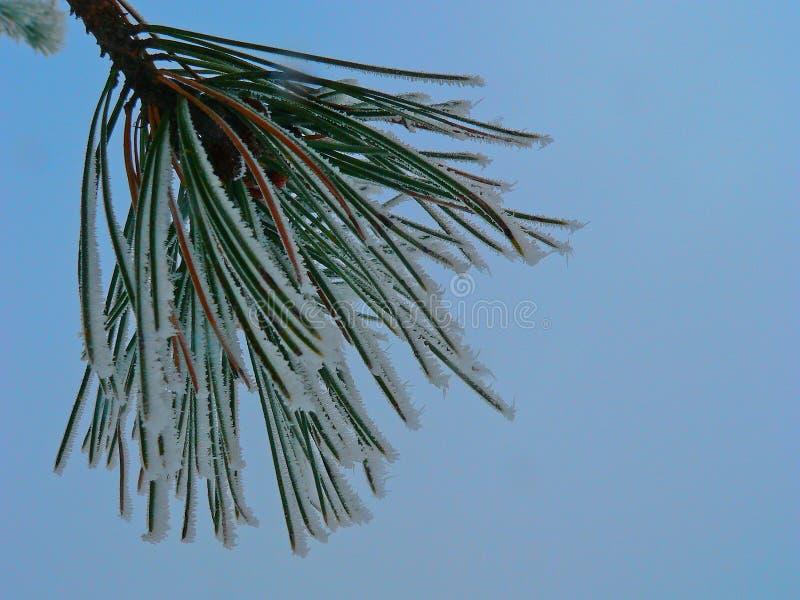 Vintern sörjer trädvisare med frost på dem arkivbild