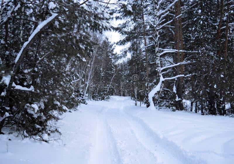 Vintern snö, skogen, trädet, förkylning, naturen, träd, landskapet, vit, björken, frost, trän, is, trä, säsong, parkerar, himmel, royaltyfri fotografi