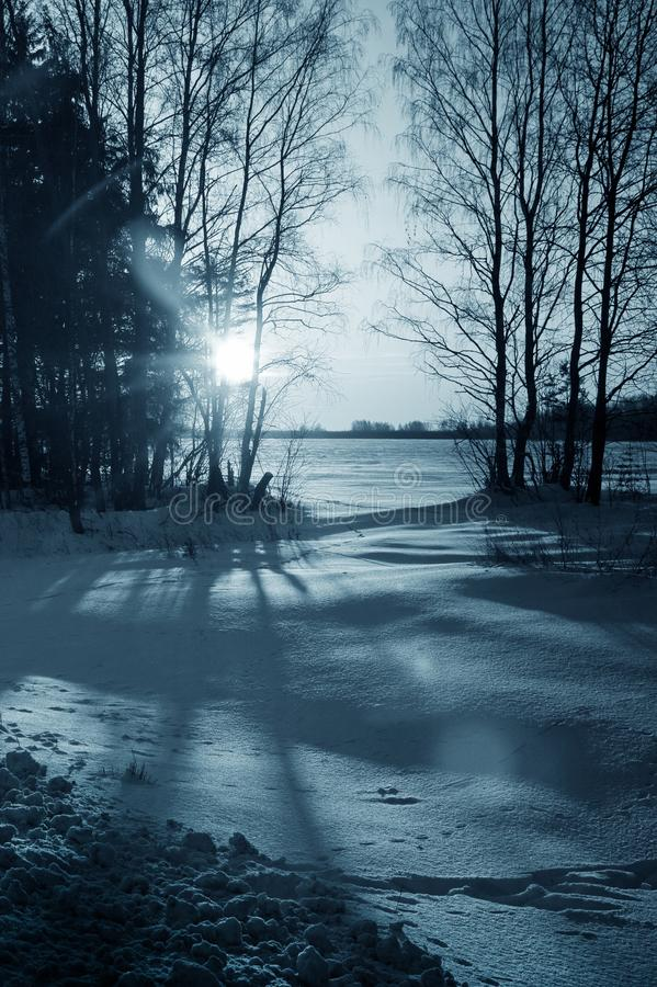 Vinternatur, nattskog royaltyfri fotografi