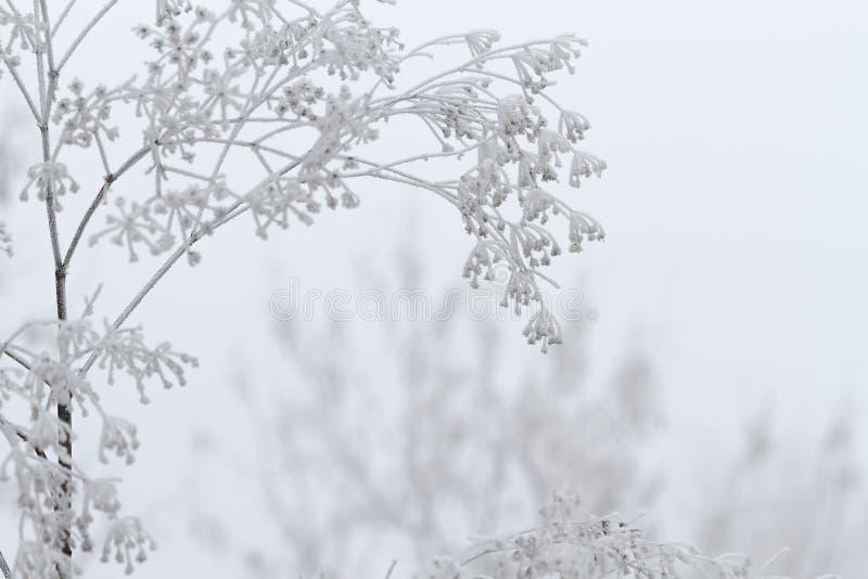 Vinterplats royaltyfri foto